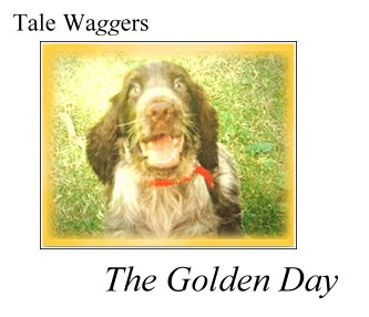 Title: Tale Waggers - The Golden Day  Photo:  Duncan in a pool of yellow light...