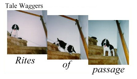 Title: Tale Waggers - Rites of Passage  Image: Emma learning how to come down stairs.