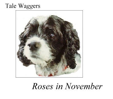 Title:  Tale Waggers Roses in November  Image: Arthur at 13