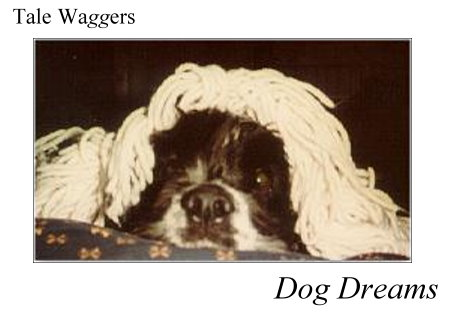 Title: Tale Waggers - Dog Dreams  Picture of Arthur asleep under the covers.