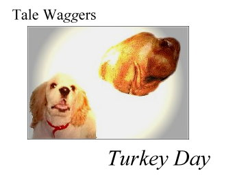 Title: Tale Waggers - TURKEY DAY!  Image: Earnest eyes the prize.